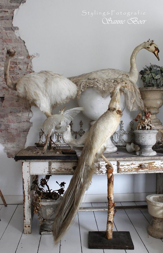 birds of a feather taxidermy
