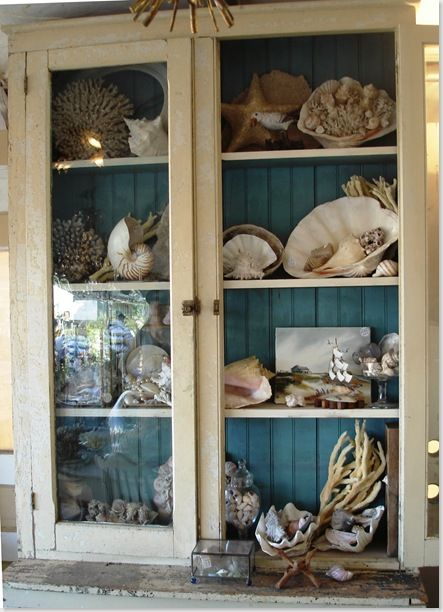 White Cabinet With A Blue Bead Board Background ~ Pretty Way To Display A Shell Collection ...