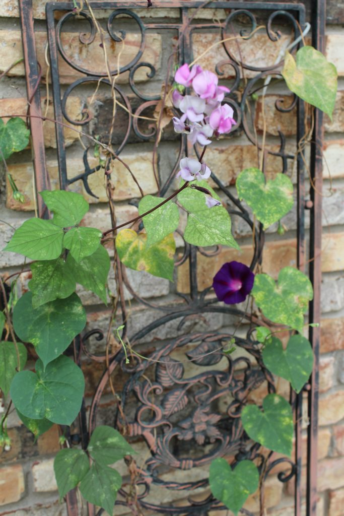 Decor To Adore Storybook Cottage Early Fall Garden vine