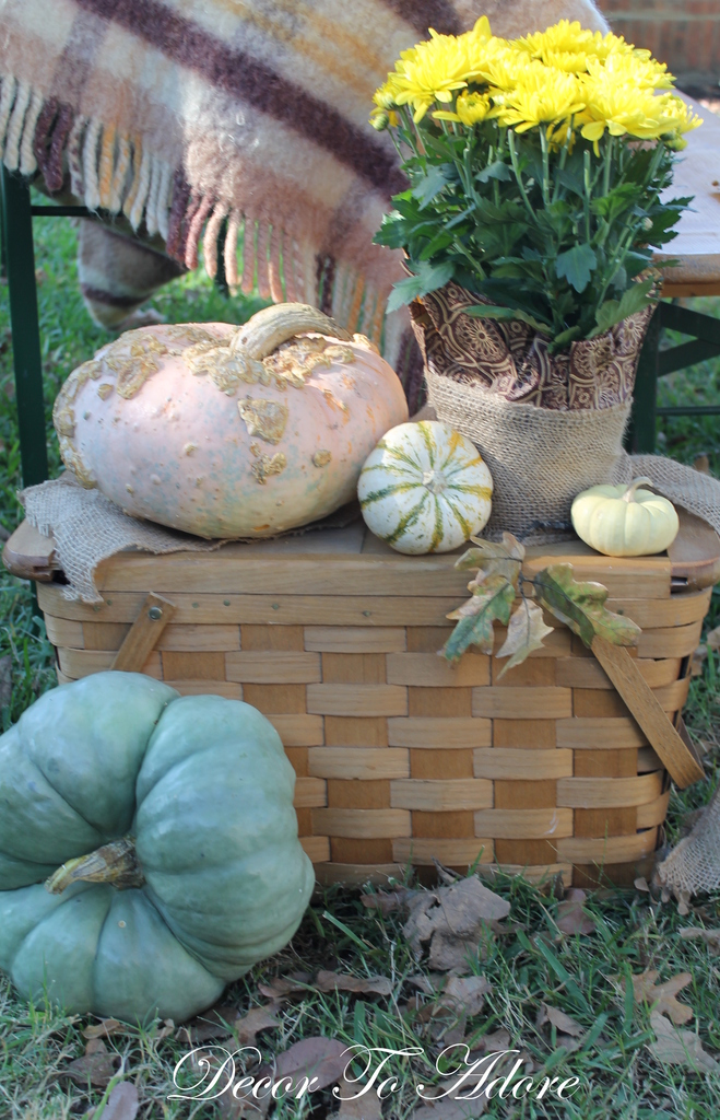 glorious gourds