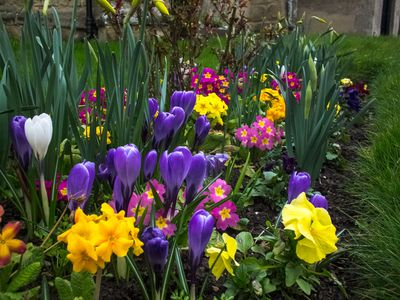 A Springtime Flower Garden