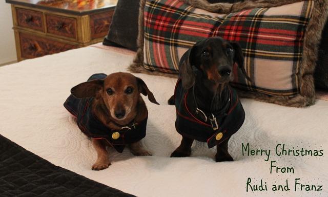 Cozy Christmas 2106 dogs