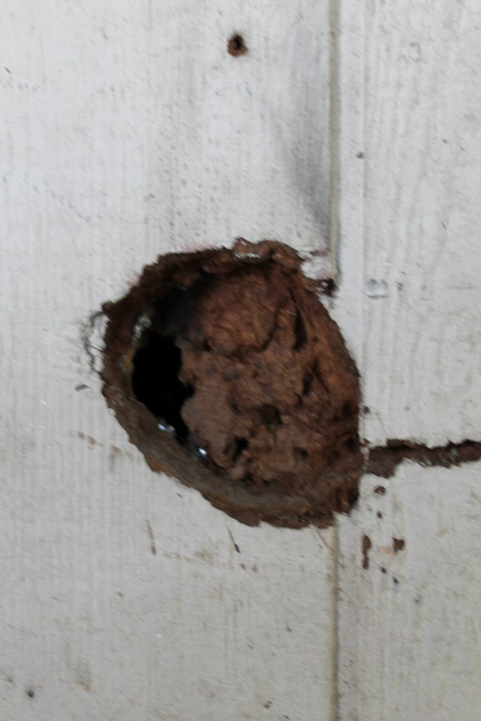 One Room Challenge Grimy Shed rat hole