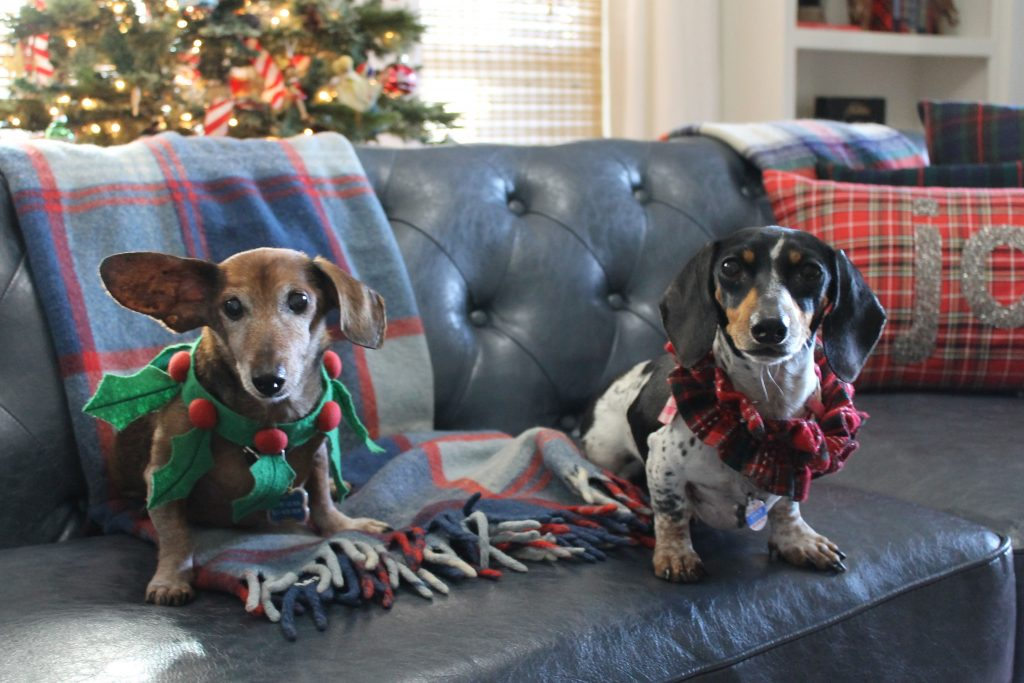 Christmas Home Tour Rudi and Gracie