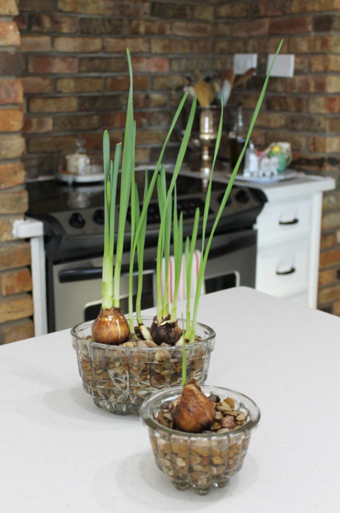 Decor To Adore paperwhites