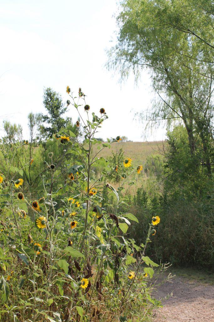 Trinity River Audubon flora