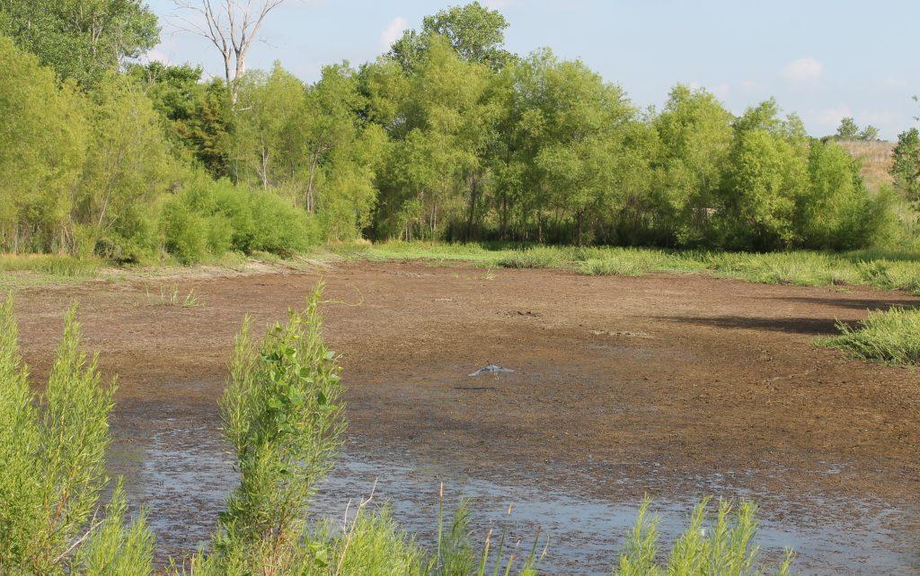 Trinity River Audubon heron