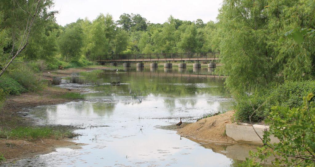 Trinity River Audubon ducks