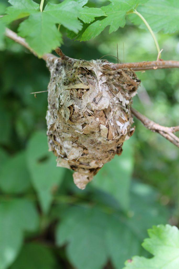 Trinity River Audubon nest
