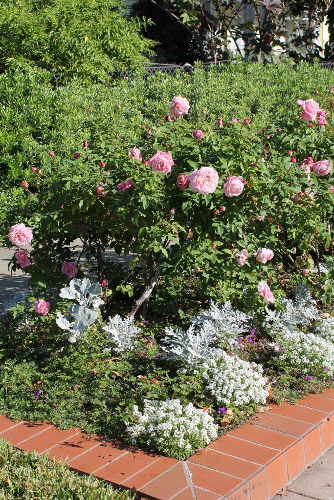 Galveston Decor To Adore flora