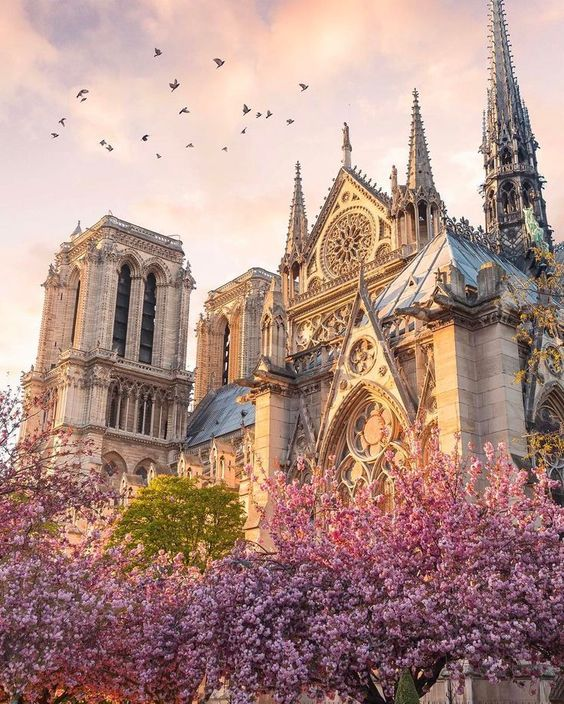 My Beautiful Notre Dame